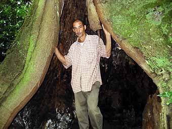 Standing at opening of tree trunk
