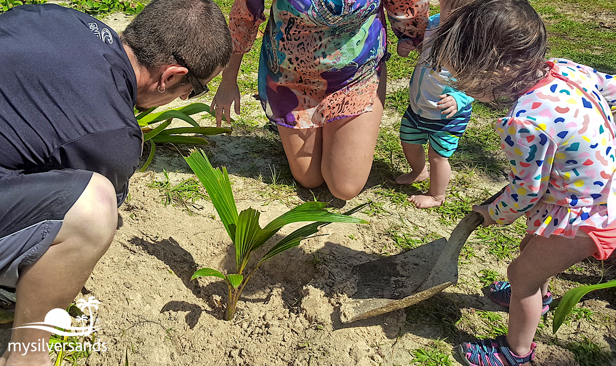 planting a coconut tree