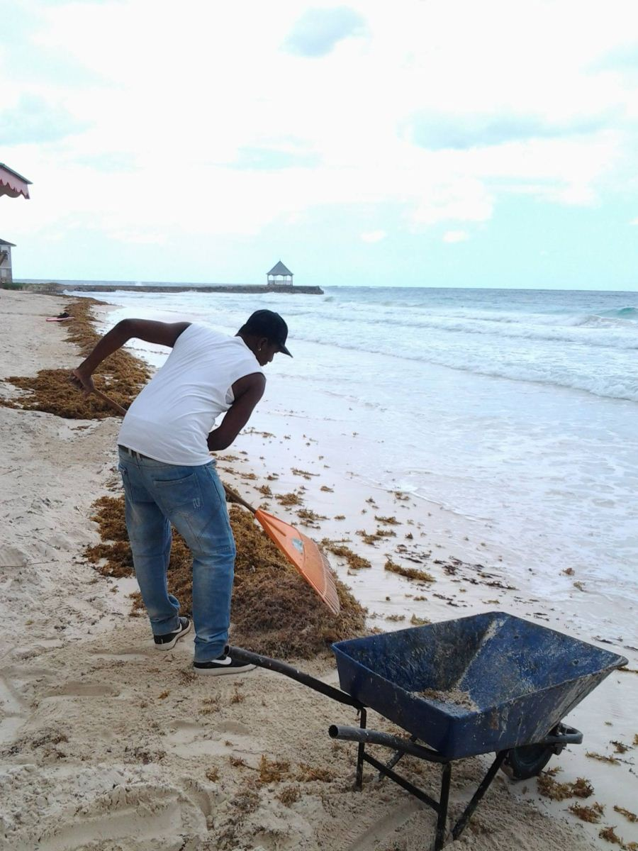 beach cleaner at silver sands jamaica