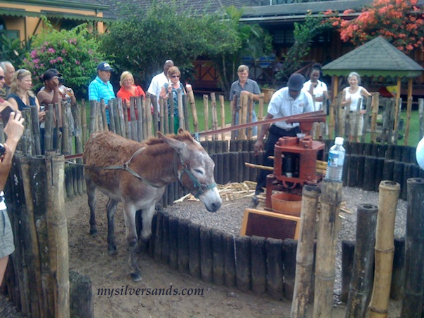 donkey power to extract sugarcane juice in the 18th century to make rum