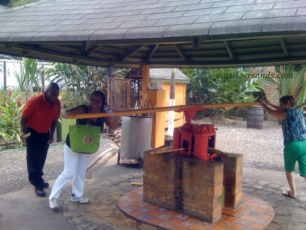 guests try their hand at extracting sugarcane juice from which rum is made