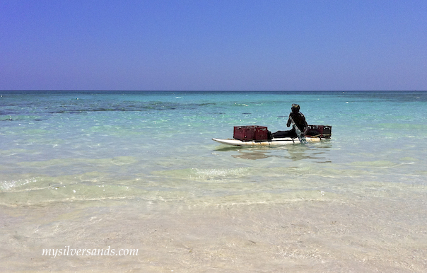 conch man, shine,paddling into Silver Sands villas Jamaica on his windsurf board